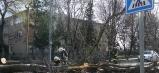 Hasiči odstraňovali spadnuté stromy z ciest.
